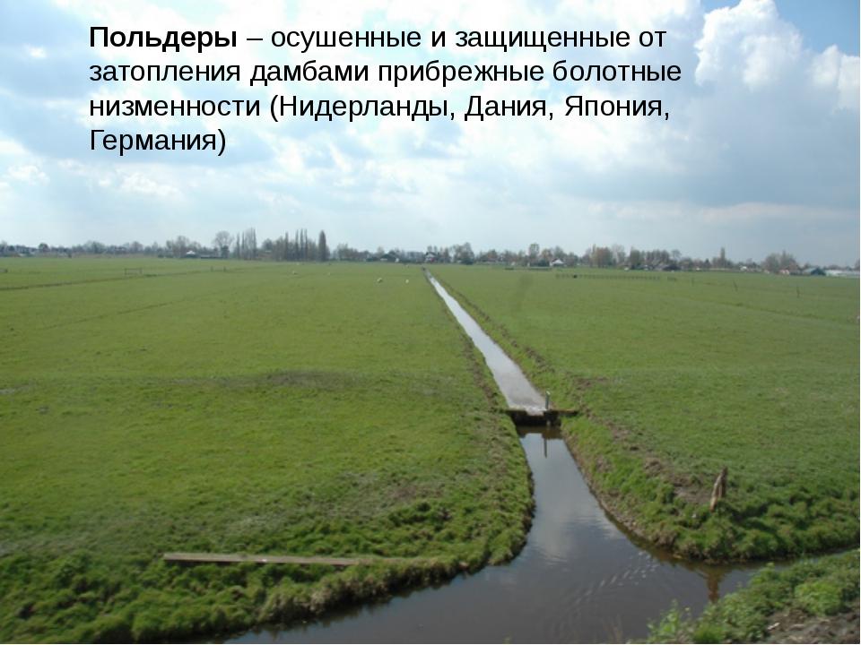 Польдеры – осушенные и защищенные от затопления дамбами прибрежные болотные н...