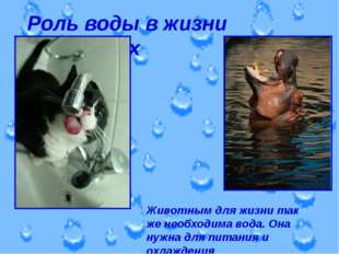Роль воды в жизни животных Животным для жизни так же необходима вода. Она нуж