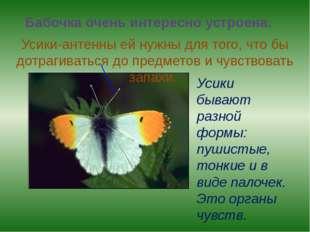 Бабочка очень интересно устроена. Усики-антенны ей нужны для того, что бы дот