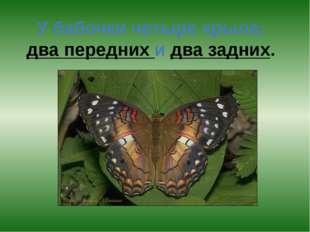 У бабочки четыре крыла: два передних и два задних.
