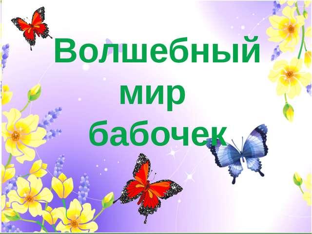 Волшебный мир бабочек