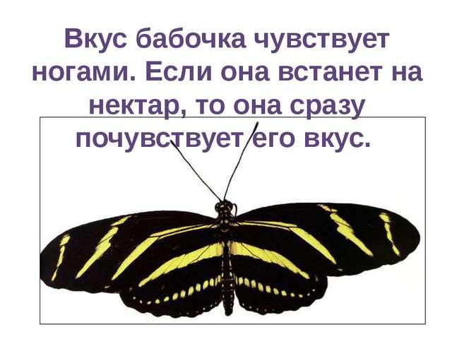 Вкус бабочка чувствует ногами. Если она встанет на нектар, то она сразу почув...