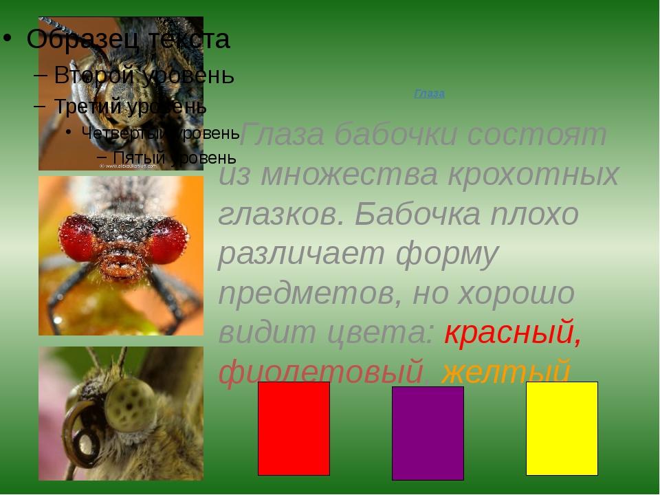 Глаза Глаза бабочки состоят из множества крохотных глазков. Бабочка плохо раз...