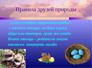 Правила друзей природы Если случайно окажешься рядом с гнездом птицы, не бери