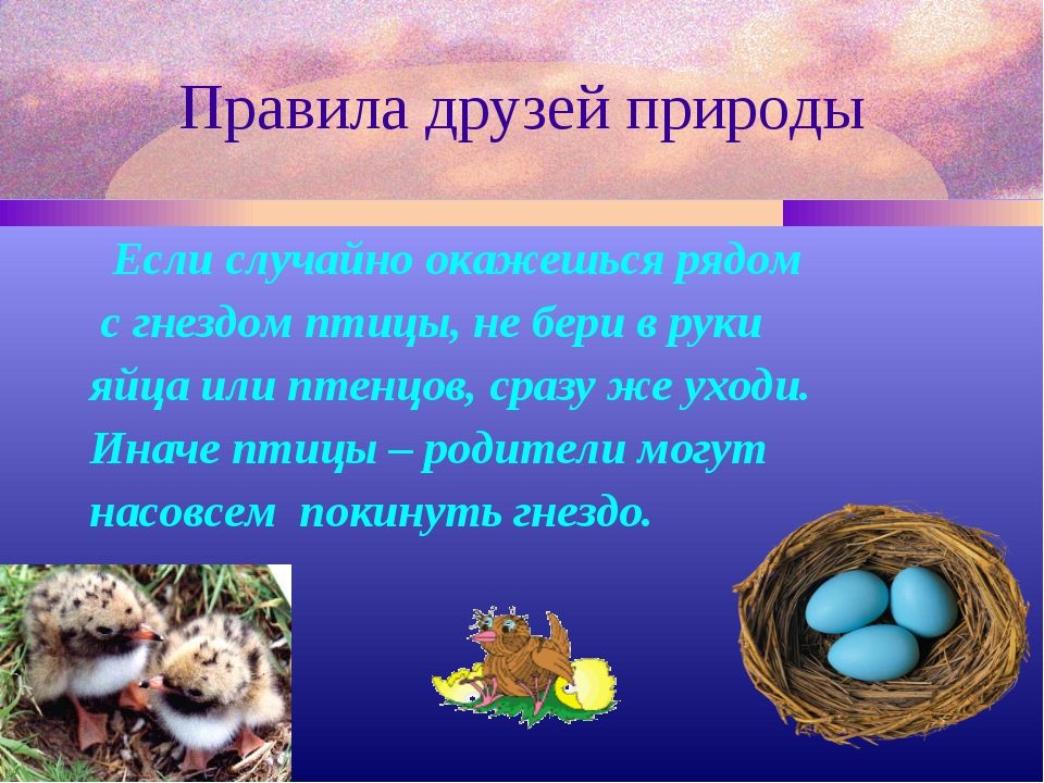 Правила друзей природы Если случайно окажешься рядом с гнездом птицы, не бери...