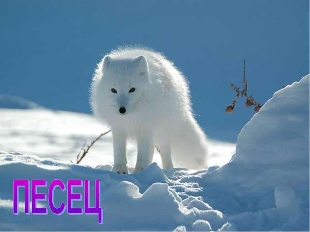 На снимках молодого фотографа никколо бонфандини можно увидеть удивительно красивые снежные скульптуры