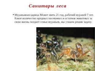 Санитары леса Муравьиная царица Может жить 21 год, рабочий муравей 7 лет. Как