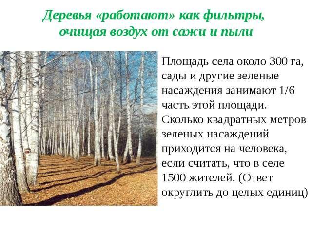 Деревья «работают» как фильтры, очищая воздух от сажи и пыли Площадь села око...