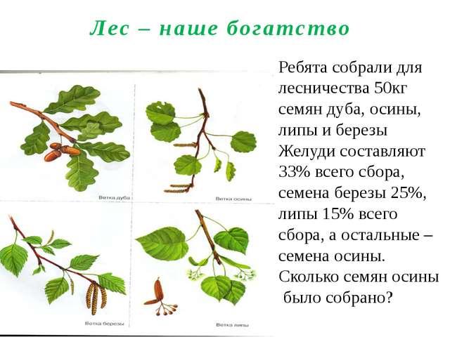 Лес – наше богатство Ребята собрали для лесничества 50кг семян дуба, осины, л...