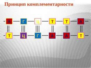 Принцип комплементарности А Г Ц Т Т А Т Ц Г А А Т