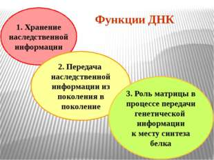 1. Хранение наследственной информации 2. Передача наследственной информации и