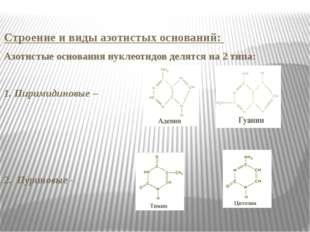 Строение и виды азотистых оснований: Азотистые основания нуклеотидов делятся