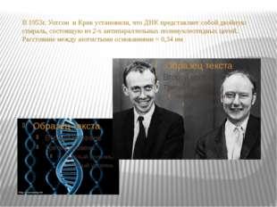 В 1953г. Уотсон и Крик установили, что ДНК представляет собой двойную спираль