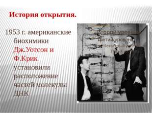 История открытия. 1953 г. американские биохимики Дж.Уотсон и Ф.Крик установил