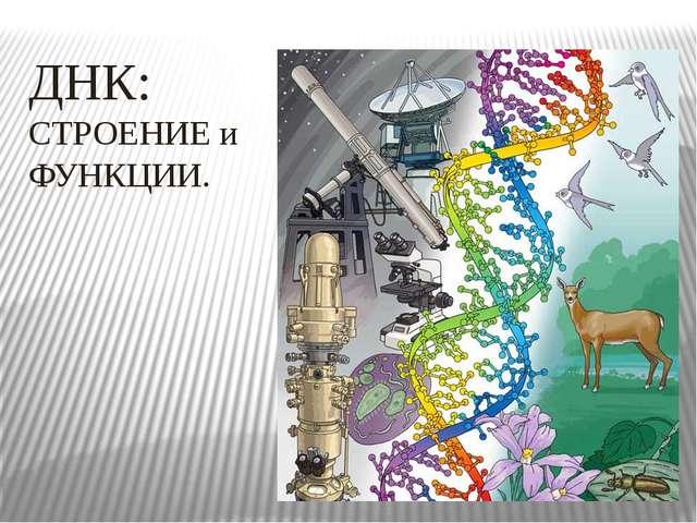 ДНК: СТРОЕНИЕ и ФУНКЦИИ.