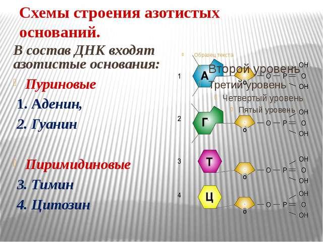Днк Краткое Содержание - logixspisok Репликация ДНК Анимация