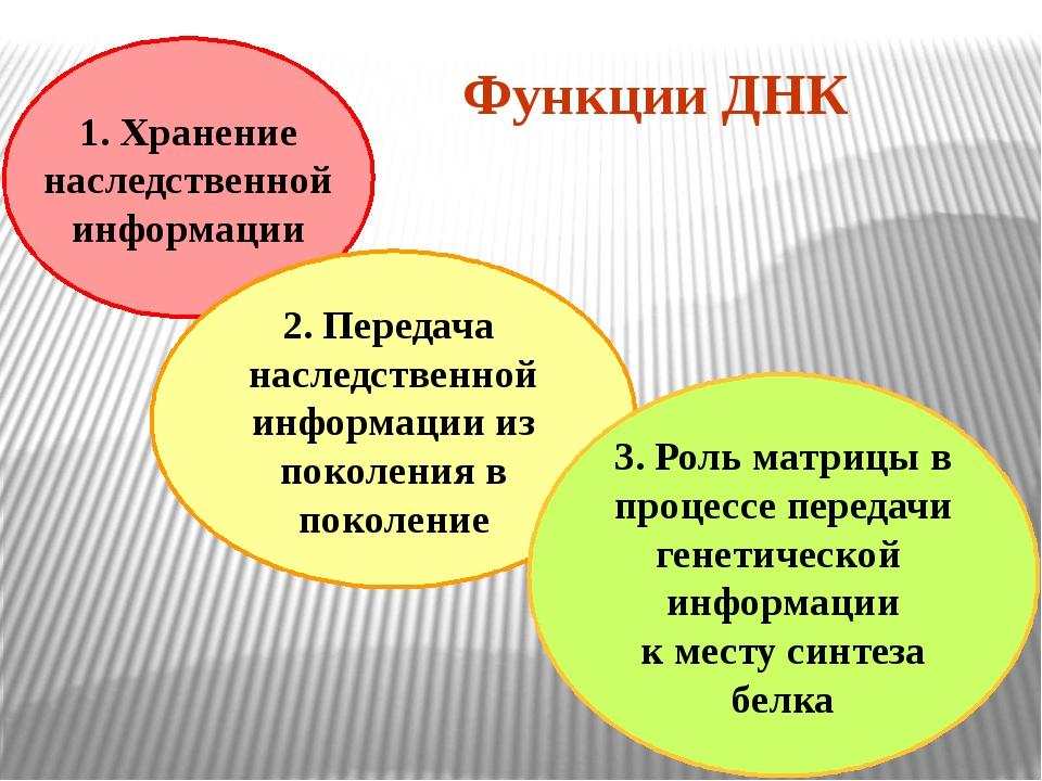 1. Хранение наследственной информации 2. Передача наследственной информации и...