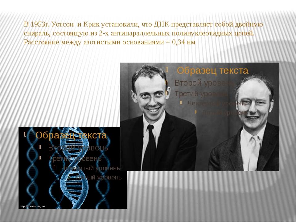 В 1953г. Уотсон и Крик установили, что ДНК представляет собой двойную спираль...