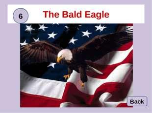 The Bald Eagle Back 6