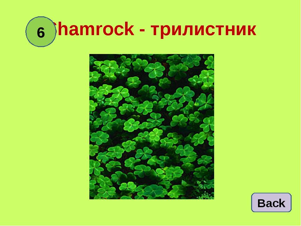 Shamrock - трилистник Back 6
