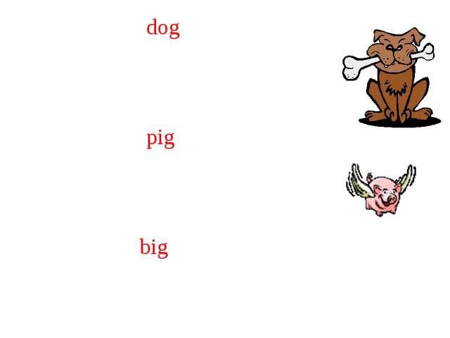dog pig big