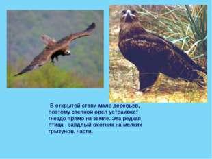 В открытой степи мало деревьев, поэтому степной орел устраивает гнездо прямо
