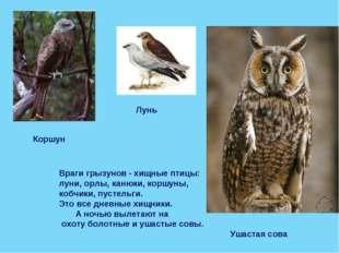 Враги грызунов - хищные птицы: луни, орлы, канюки, коршуны, кобчики, пустельг