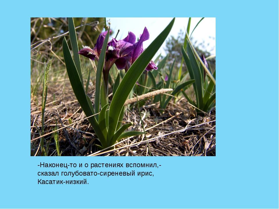 -Наконец-то и о растениях вспомнил,- сказал голубовато-сиреневый ирис, Касати...
