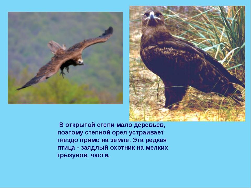 В открытой степи мало деревьев, поэтому степной орел устраивает гнездо прямо...