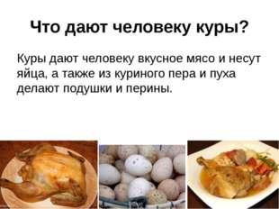 Что дают человеку куры? Куры дают человеку вкусное мясо и несут яйца, а также