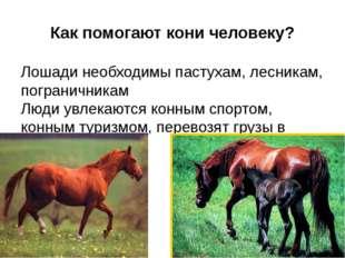 Как помогают кони человеку? Лошади необходимы пастухам, лесникам, пограничник