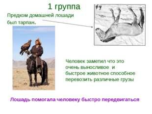 Предком домашней лошади был тарпан. Человек заметил что это очень выносливое