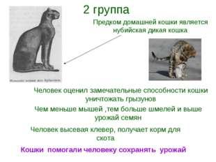 Предком домашней кошки является нубийская дикая кошка Человек оценил замечате