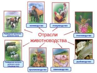 Отрасли животноводства Разведение крупного рогатого скота Разведение мелкого