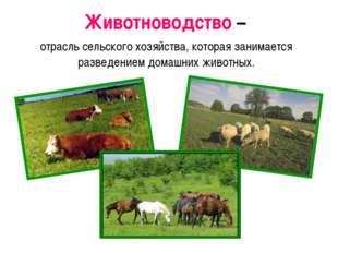 Животноводство – отрасль сельского хозяйства, которая занимается разведением