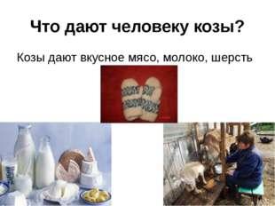 Что дают человеку козы? Козы дают вкусное мясо, молоко, шерсть