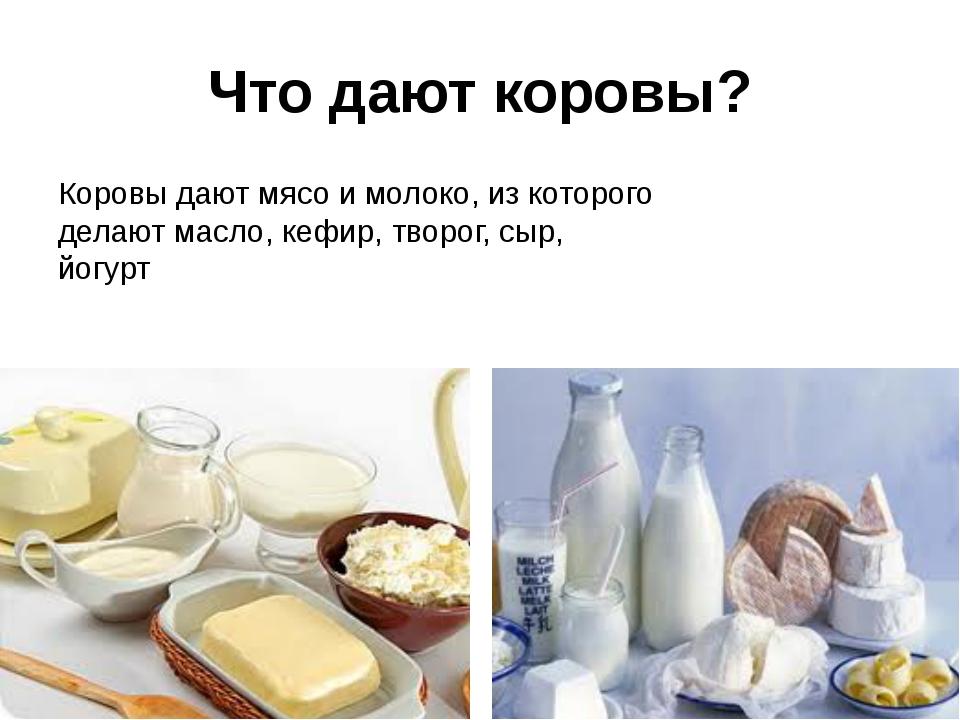 Что дают коровы? Коровы дают мясо и молоко, из которого делают масло, кефир,...