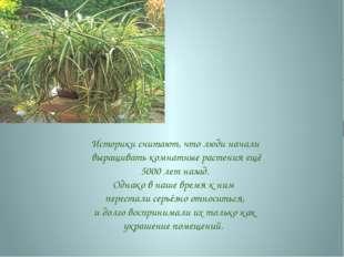 Историки считают, что люди начали выращивать комнатные растения ещё 5000 лет