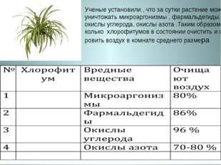 Ученые установили , что за сутки растение может уничтожать микроаргонизмы , ф