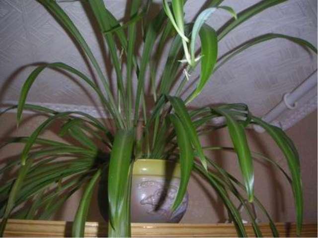 Задачи проекта научить вести наблюдения за комнатными растениями; научить про...