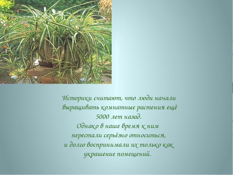 Историки считают, что люди начали выращивать комнатные растения ещё 5000 лет...