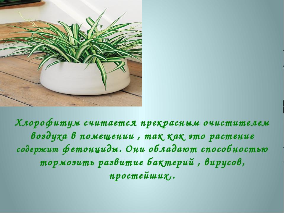 Хлорофитум считается прекрасным очистителем воздуха в помещении , так как это...