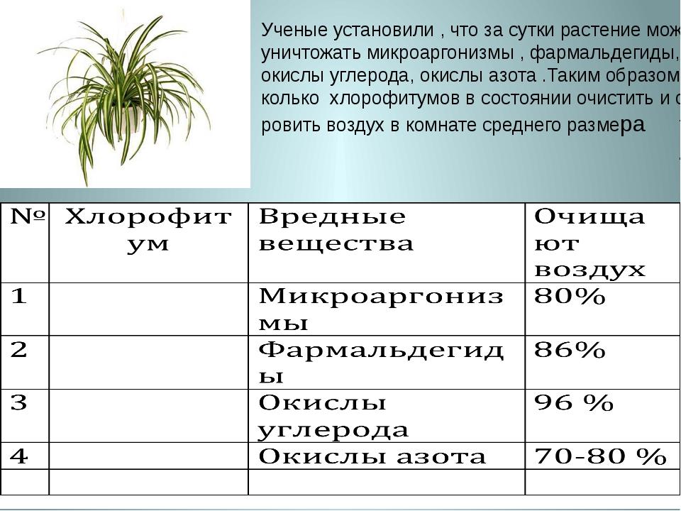 Ученые установили , что за сутки растение может уничтожать микроаргонизмы , ф...