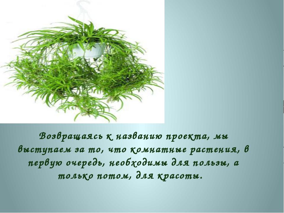Возвращаясь к названию проекта, мы выступаем за то, что комнатные растения, в...