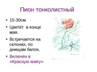 Пион тонколистный 15-30см Цветёт в конце мая. Встречается на склонах, по днищ