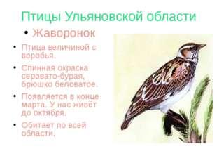 Птицы Ульяновской области Жаворонок Птица величиной с воробья. Спинная окраск