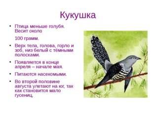 Кукушка Птица меньше голубя. Весит около 100 грамм. Верх тела, голова, горло