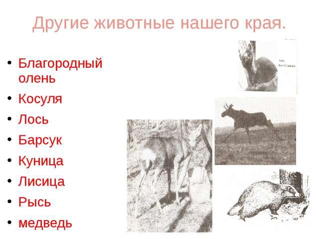 Другие животные нашего края. Благородный олень Косуля Лось Барсук Куница Лиси...