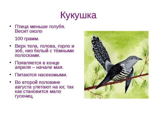Кукушка Птица меньше голубя. Весит около 100 грамм. Верх тела, голова, горло...