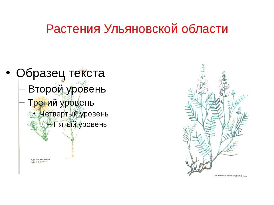 Растения Ульяновской области